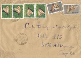 Burkina Faso 2004 Ouagadougou Heliocoverpa Moth Insect Cat Cover - Burkina Faso (1984-...)