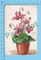 Cpa ( Vase De Fleurs, Cover Kingsey Falls 1908 Quebec) Photo Carte Postale Postcard Recto/verso - Fleurs, Plantes & Arbres