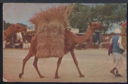 WC724 TYPICAL SCENE KARACHI SUBURB W. PAKISTAN - Pakistan