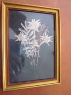 TABLEAU  ANCIEN AVEC 4 EDELWEISS RARE - B. Plantes Fleuries & Fleurs