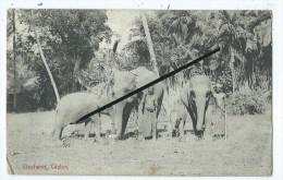 CPA - Elephants,Ceylon - Sri Lanka (Ceylon)