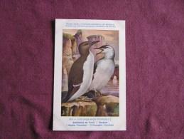 GUILLEMOT DE TROÏL  Musée Royal D´ Histoire Naturelle Belgique Oiseau Bird Oiseaux Illustration DUPOND H Carte Postale - Birds