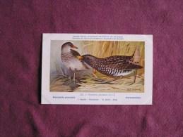 MAROUETTE PONCTUEE  Musée Royal D´ Histoire Naturelle Belgique Oiseau Bird Oiseaux Illustration DUPOND H Carte Postale - Oiseaux