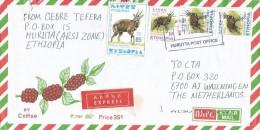 Ethiopia 2007 Hurutta Postal Agency Bushbuck Antilope Cover - Ethiopië