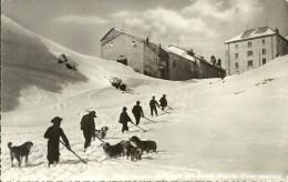DOGS - HOSPICE Du GRAND St.BERNARD, ARRIVEE D´UNE CARAVANE, SWITZERLAND.   (ANIM - Chiens