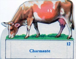 VACHE SERIEUSE - Animals