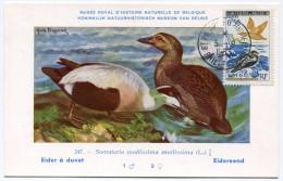 ST PIERRE ET MIQUELON CARTE MAXIMUM DU N°364  50c. EIDERS OBLITERATION ST PIERRE ET MIQUELON 5-8-1963 - Cartes-maximum