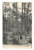 Cp, 17, Ile De Ré - Les Portes, Forêt De Trousse Chemise - Ile De Ré