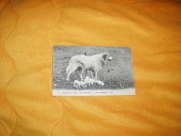 CARTE POSTALE ANCIENNE CIRCULEE DATE ?. / 9.- SCENES ET TYPES DES PYRENEES.- CHIENS DE MONTAGNE. - Dogs