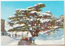 *** LIBAN - LES CEDRES (The Cedars) - Sous La Neige  *** CPM Ecrite - Edit. DADIAN - Liban