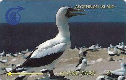 Ascension Isl. - White Booby Bird, 2CASA, 1991, 5.250ex, Used - Islas Ascensión