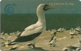 Ascension Isl. - White Booby Bird, 4CASA, 1994, 5.000ex, Used - Ascension