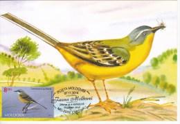 Moldova ,  Moldavie , Moldau ; 2014 ;  Fauna Moldova ;  Birds ; Yellow Wagtail ; Maxicard ; First Day - Moldawien (Moldau)