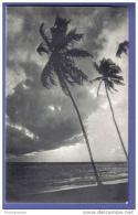 The Sea Shore By Moonlight - Palmiers - Sri Lanka - Sri Lanka (Ceylon)