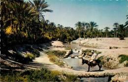ALGERIE OUED DANS LA PALMERAIE - Algérie