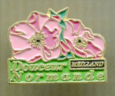 Pin´s - Douceur Normande De Meilland - Fleur - Autres