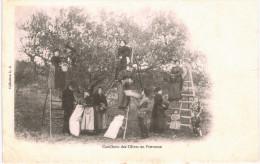 AGRICULTURE ..... CUEILLETTE DES OLIVES EN PROVENCE - Non Classificati