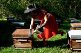 Postal Stationery 2 Stamped C-d26-21- Honeybees , Bees,apiculture - Honeybees