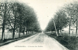ARTHABASKA = L'Avenue Des Erables - Other
