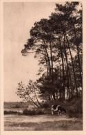 CPA  YVON  22  --  DPT  40  --  HOSSEGOR  --  LE  FOND  DU  LAC  --  LES  LANDE  DE  GASCOGNE.....NEUVE - Hossegor