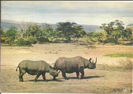 - AFRIQUE - FAUNE - RHINOCEROS - - Rhinocéros