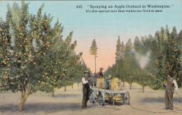 WASHINGTON, 1900-1910's; Spraying An Apple Orchard In Washington - Autres