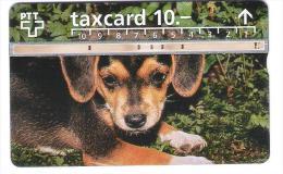 Schweiz - P54 - Dog - Hund - 607A - Switzerland