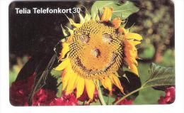 Schweden - Sweden - SWE-142 - 03/96 - Sunflower - Suecia