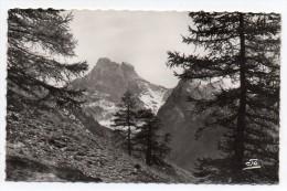 Cpsm 05 - Vallée Du Queyras - Le Mont Viso Vu Des Pentes De La Lauzière - (9x14 Cm) - France