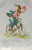 Lapins - Animaux  - Vélo - Bon Etat - Voir Scan - Ohne Zuordnung