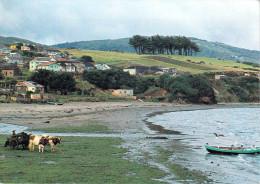 Amérique > Chili  CHILE  ANCUD Chiloe Chile (Décima Region)(vache Vaches Plage) *PRIX FIXE - Chili