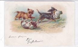 CARD CANE BASSOTTO - BASSET SAUS-SAGE DOG   BASSOTTO GIOCA CON GIOCATTOLO CONIGLIO  FP-V-2 -0882 22577 - Chiens