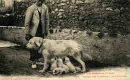 ANIMAUX   L 6  /   CHIENS   /  DOG    CPA  9 X 14 - Dogs