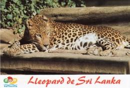 Postcard - Leopard At Barcelona Zoo. 32 - Cats