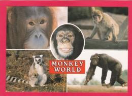 Post Card Of Monkey World, Ape Rescue Centre, Dorset, B16. - Monkeys