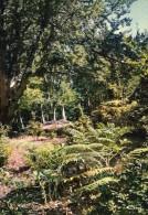 20 - VIZZAVONA - Coin De La Forêt Domaniale De Vizzavona Aux Promenades Sans Pareil Dans Le Calme Et Le Repos . - France
