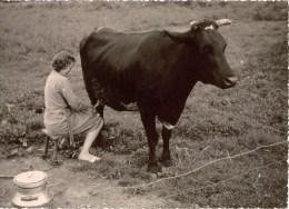 Belle Photographie Femme En Train De Traire Une Vache , 1963 , Identfiée Au Dos - Identified Persons