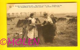 HAGEN Van Het VLAS - MISE EN CHAINES CULTURE  DU LIN Te KORTRIJK - FLAX LEIN LINO LINHO  2551 - Kortrijk