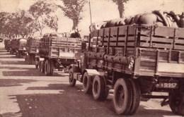 TRAIN DES EQUIPAGES MILITAIRES - TRANSPORT DE CHEVAUX - Equipment