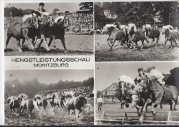 HENGSTLEISTUNGSSCHAU MORITZBURG     BKA-780 - Postcards