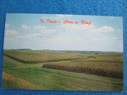 In Iowa - Corn Is King - Etats-Unis