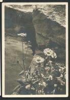 DEUTSCHES III REICH   POSTKARTE MIT SONDERSTEMPEL 30/7/1939  REICHGARTENSCHAU STUTTGART -HOLLBERG - Stuttgart