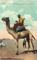 CHAMEAUX ... CAMEL ... MEHARISTE  SOUDANAIS - Animals