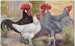 POULES- - Oiseaux