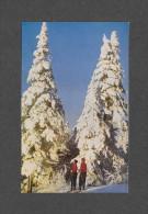 SPORTS D' HIVER - SKI - DANS LES LAURENTIDES - SOLEIL D' OR DANS UN MONDE BLANC - GOLDEN SUNLIGHT IN A WORLD OF WHITE - Sports D'hiver