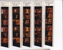 PUBLICITE PHARMACIE LABORATOIRE CLEVENOT MEDICAMENTS COLLECTION CHIENS DE RACE 18 VUES STEREO TRES RARE !!! - Reclame