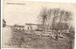 Gard : Vergèse-Pascalet, Berger Gardant Ses Moutons - Vergèze