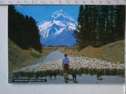 Cart - Oceania - Nuova Zelanda- Sheepdroving, Mount Cook. - Nuova Zelanda