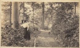 Photo Ancienne Panorama Dans Les Bois De Remouchamps 14,5x9cm - Photographs