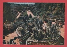 MAROC MEKNES  LA VALLEE HEUREUSE D EMILE..  PAGNON PLANTES EXOTIQUES HAPPY VALLEY   MERKNES   / RECTO VERSO - Marocco